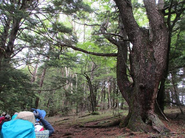 画像2: 山旅会ツアー8月までの催行状況 のご案内です!