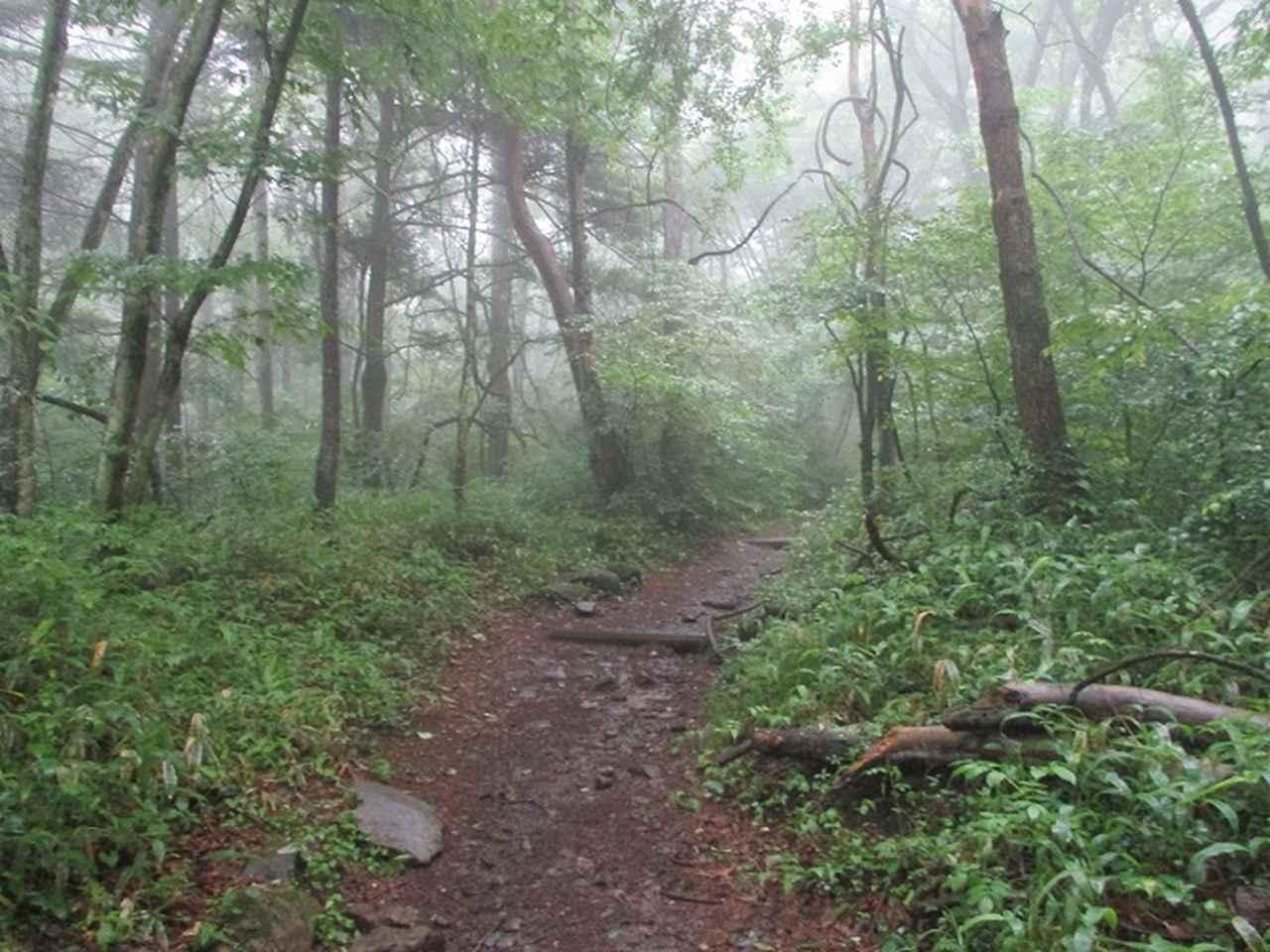 画像1: 7月の山旅会 「飯盛山」 ツアーの下見に行ってきました!