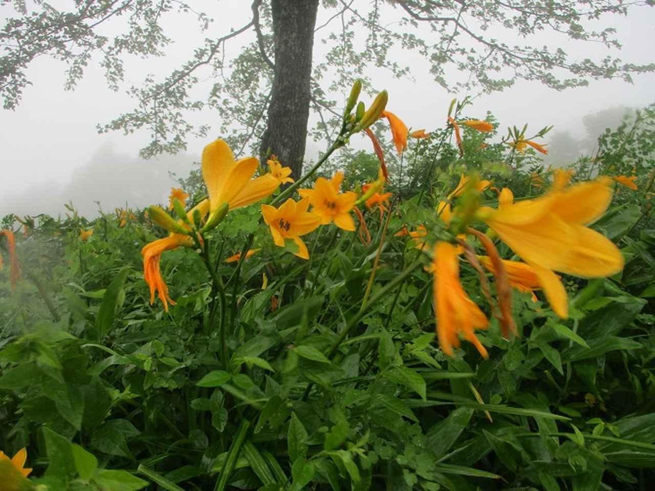 画像9: 7月の山旅会 「飯盛山」 ツアーの下見に行ってきました!