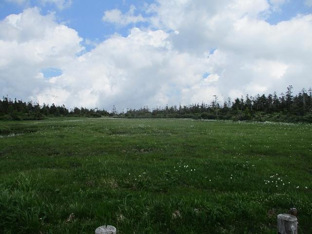 画像4: 7月の山旅会「八幡平・八甲田山・森吉山」のツアーの下見に行ってきました!