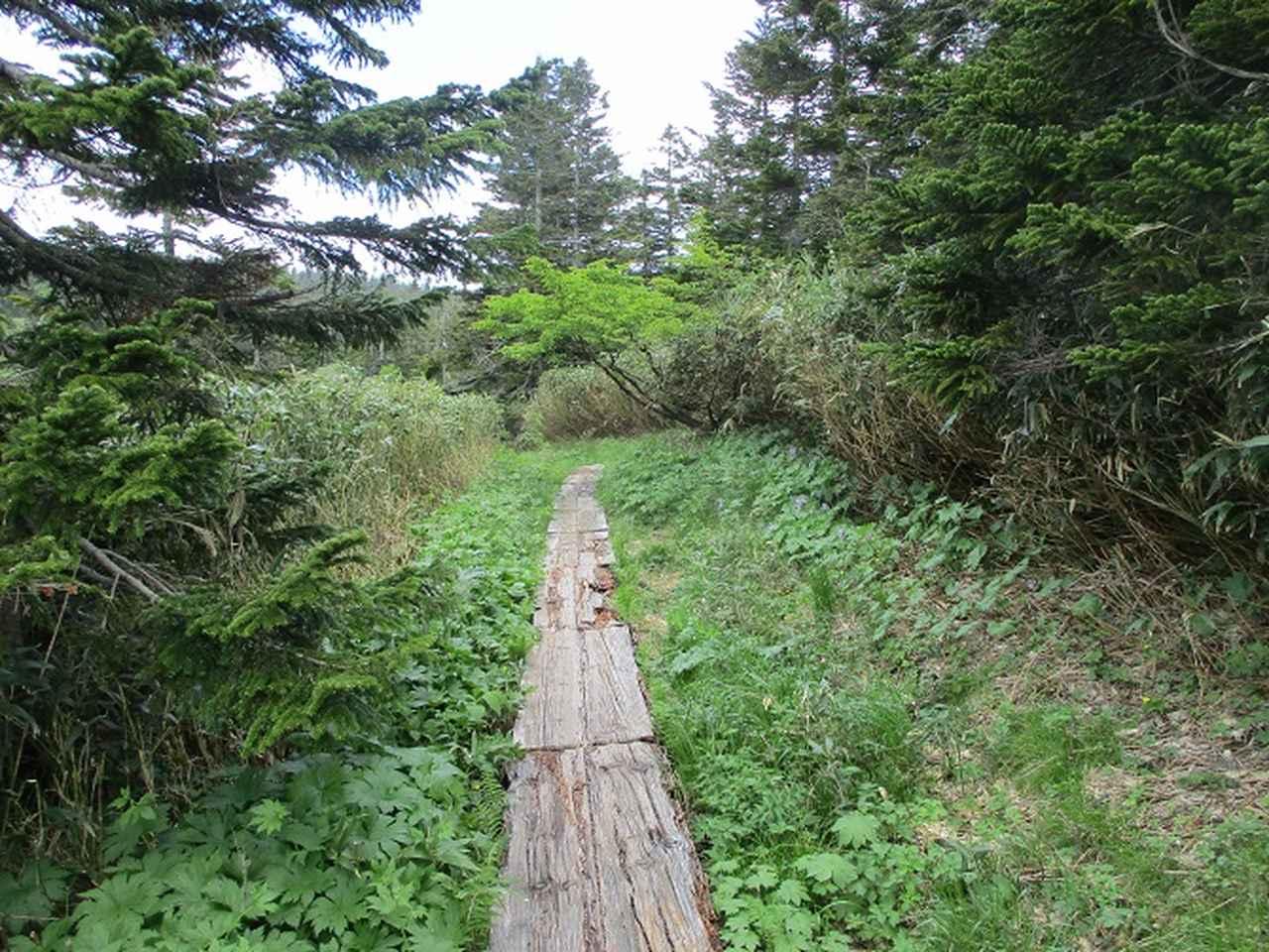画像1: 7月の山旅会「八幡平・八甲田山・森吉山」のツアーの下見に行ってきました!