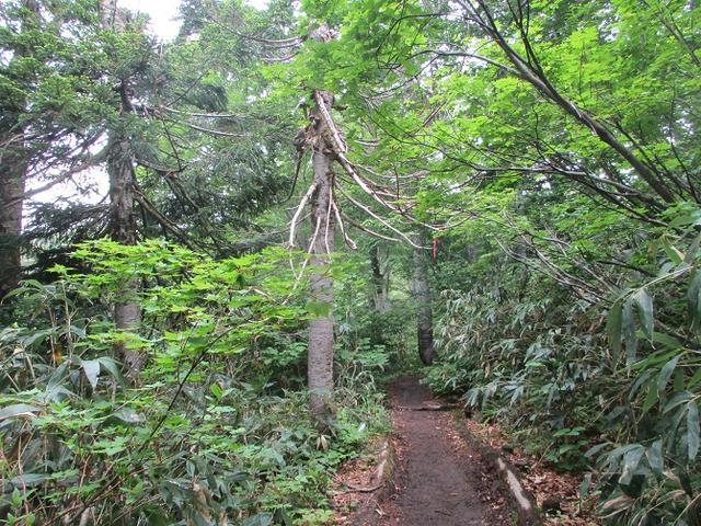 画像2: 7月の山旅会 「八幡平・八甲田山・森吉山」 ツアーの下見に行ってきました!