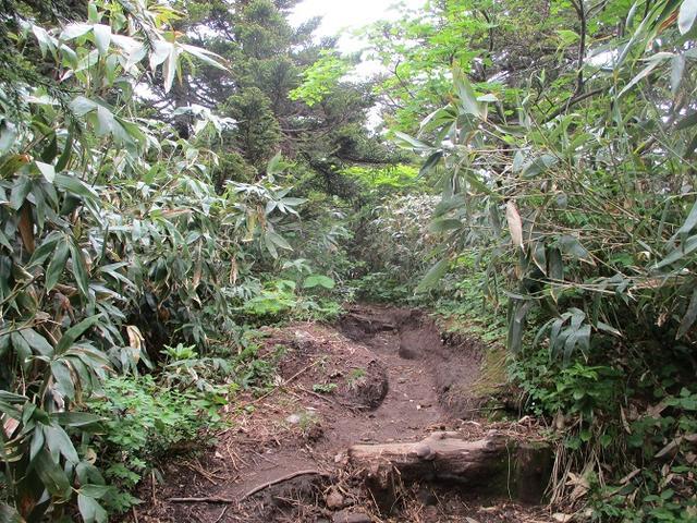 画像6: 7月の山旅会 「八幡平・八甲田山・森吉山」 ツアーの下見に行ってきました!