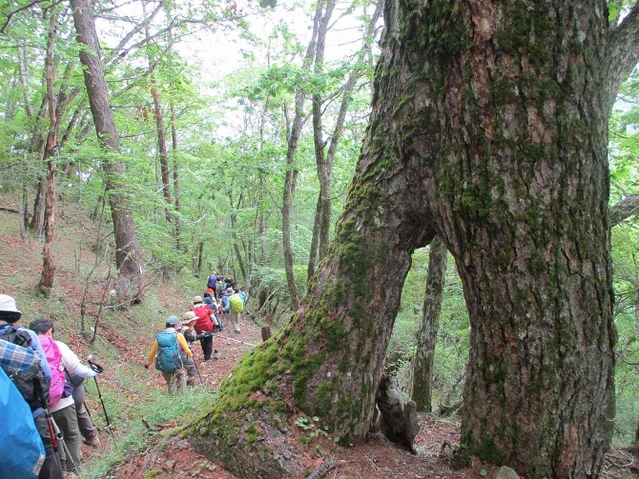 画像14: 7月2日に岡田ガイドのコースで山梨県にたたずむ櫛形山へいってきました♪