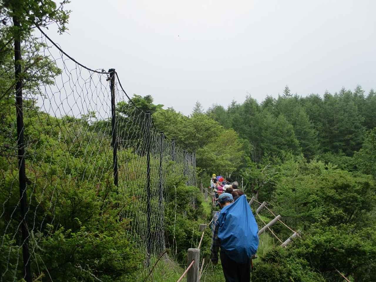 画像9: 7月2日に岡田ガイドのコースで山梨県にたたずむ櫛形山へいってきました♪