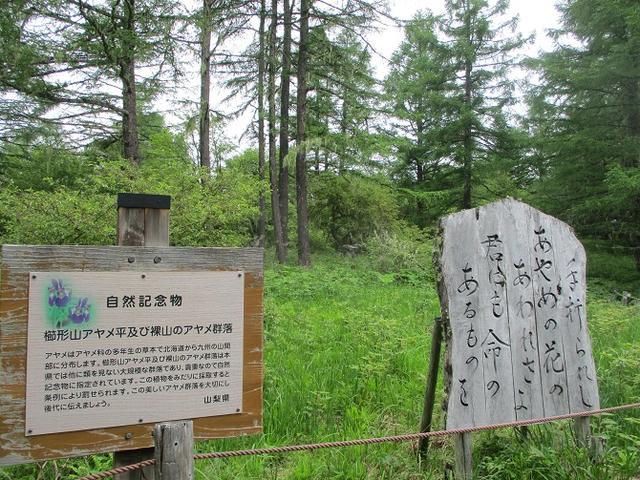 画像13: 7月2日に岡田ガイドのコースで山梨県にたたずむ櫛形山へいってきました♪