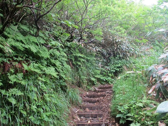 画像7: 7月の山旅会 「苗場山」 ツアーの下見にいってきました!
