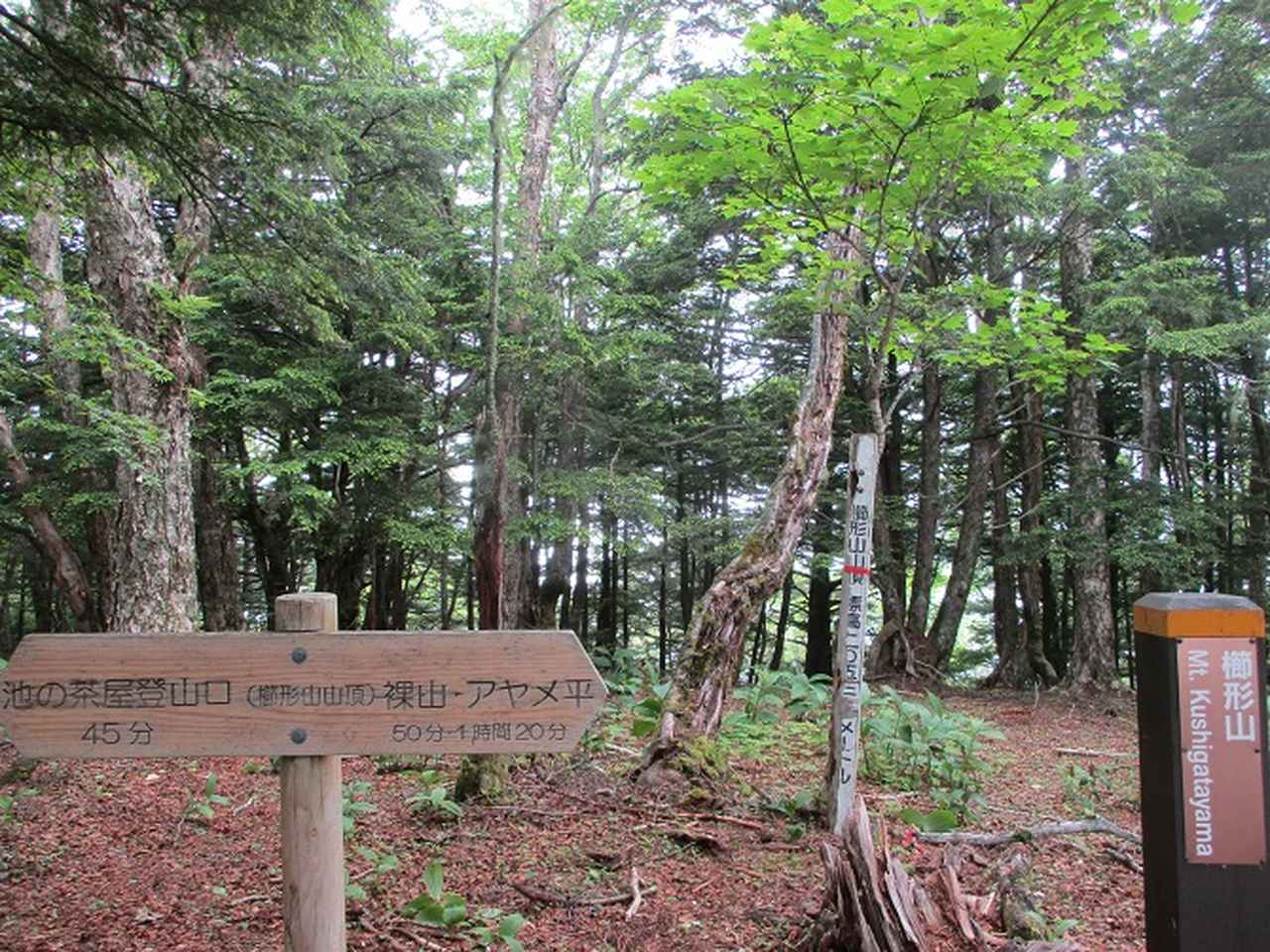 画像5: 7月2日に岡田ガイドのコースで山梨県にたたずむ櫛形山へいってきました♪