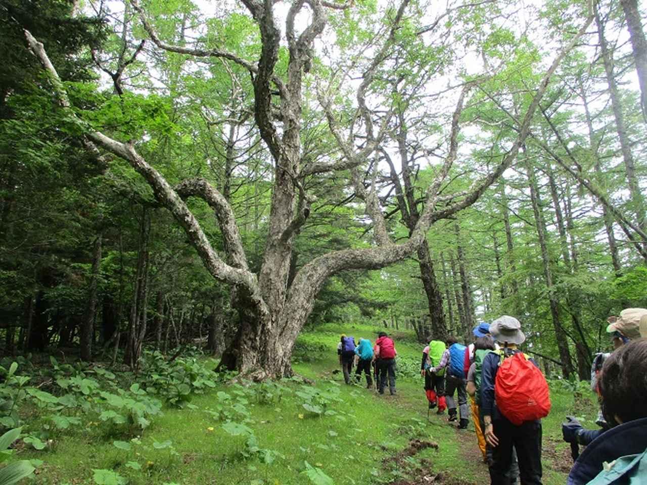 画像3: 7月2日に岡田ガイドのコースで山梨県にたたずむ櫛形山へいってきました♪