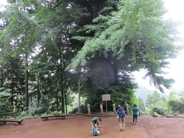 画像2: 7月6日に山旅会現地集合 「関八州見晴台から黒山三滝」 ツアーにいってきました!