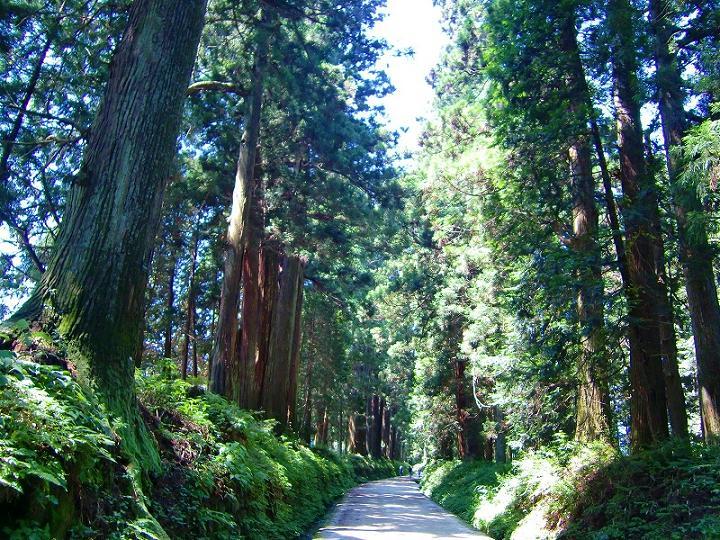 画像: 樹齢400年以上とも言われる杉並木