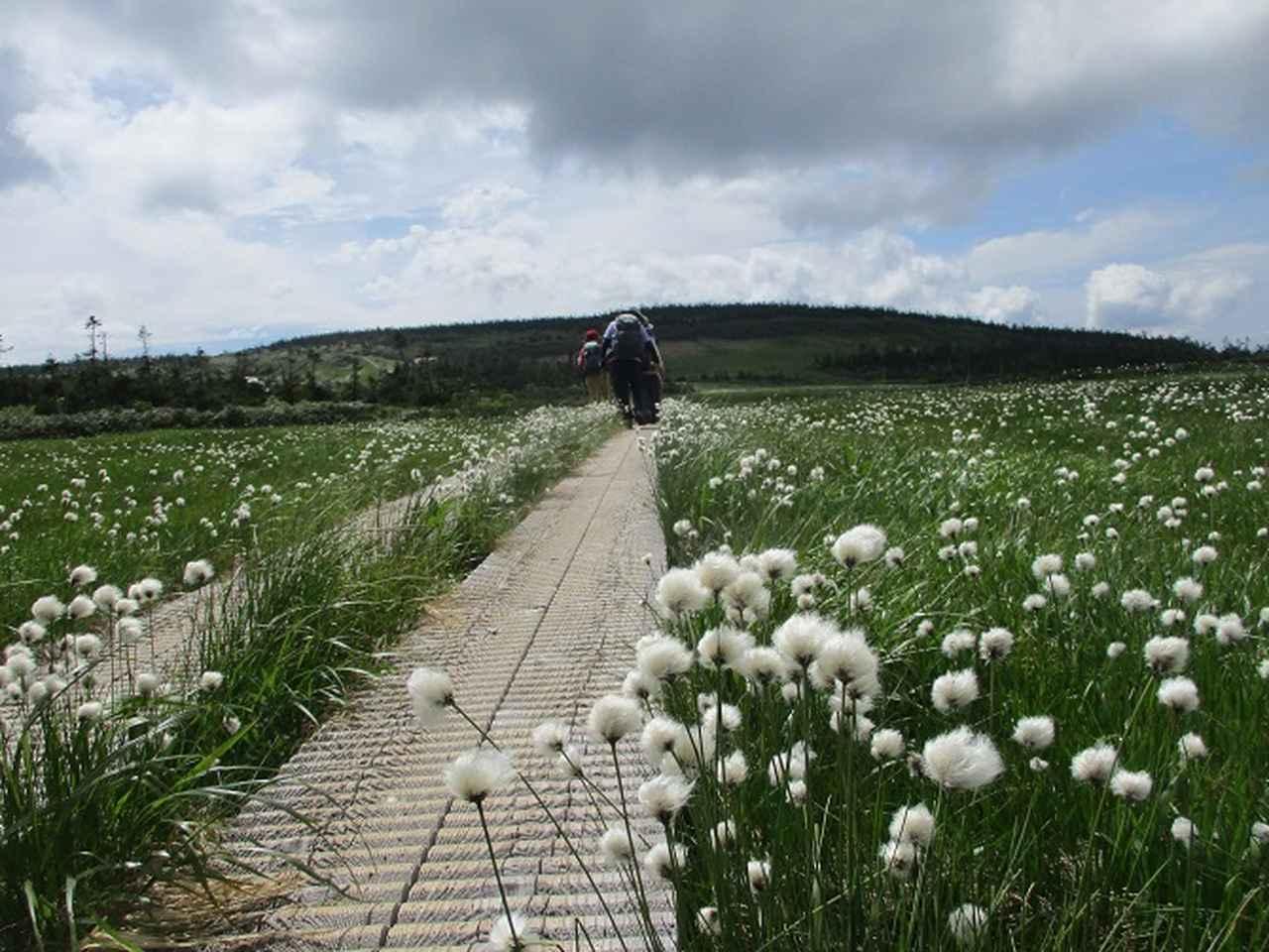 画像13: 7月9日から11日で岡田ガイドと東北の花の名山をめぐるに行ってきました!