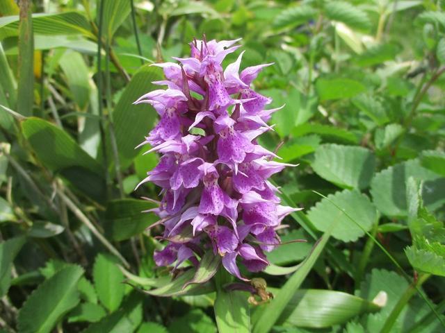 画像3: 7月9日から11日で岡田ガイドと東北の花の名山をめぐるに行ってきました!