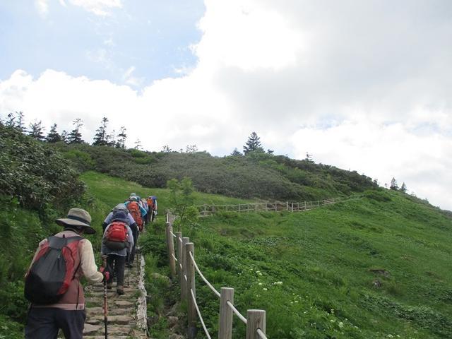 画像8: 7月9日から11日で岡田ガイドと東北の花の名山をめぐるに行ってきました!