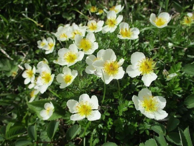 画像12: 7月9日から11日で岡田ガイドと東北の花の名山をめぐるに行ってきました!