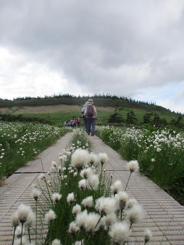 画像14: 7月9日から11日で岡田ガイドと東北の花の名山をめぐるに行ってきました!