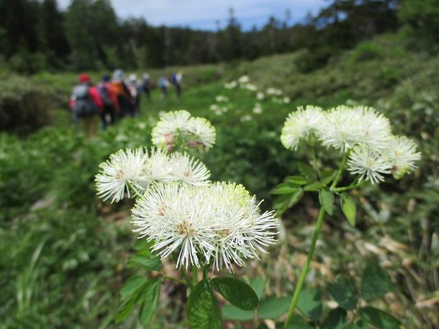 画像4: 7月9日から11日で岡田ガイドと東北の花の名山をめぐるに行ってきました!