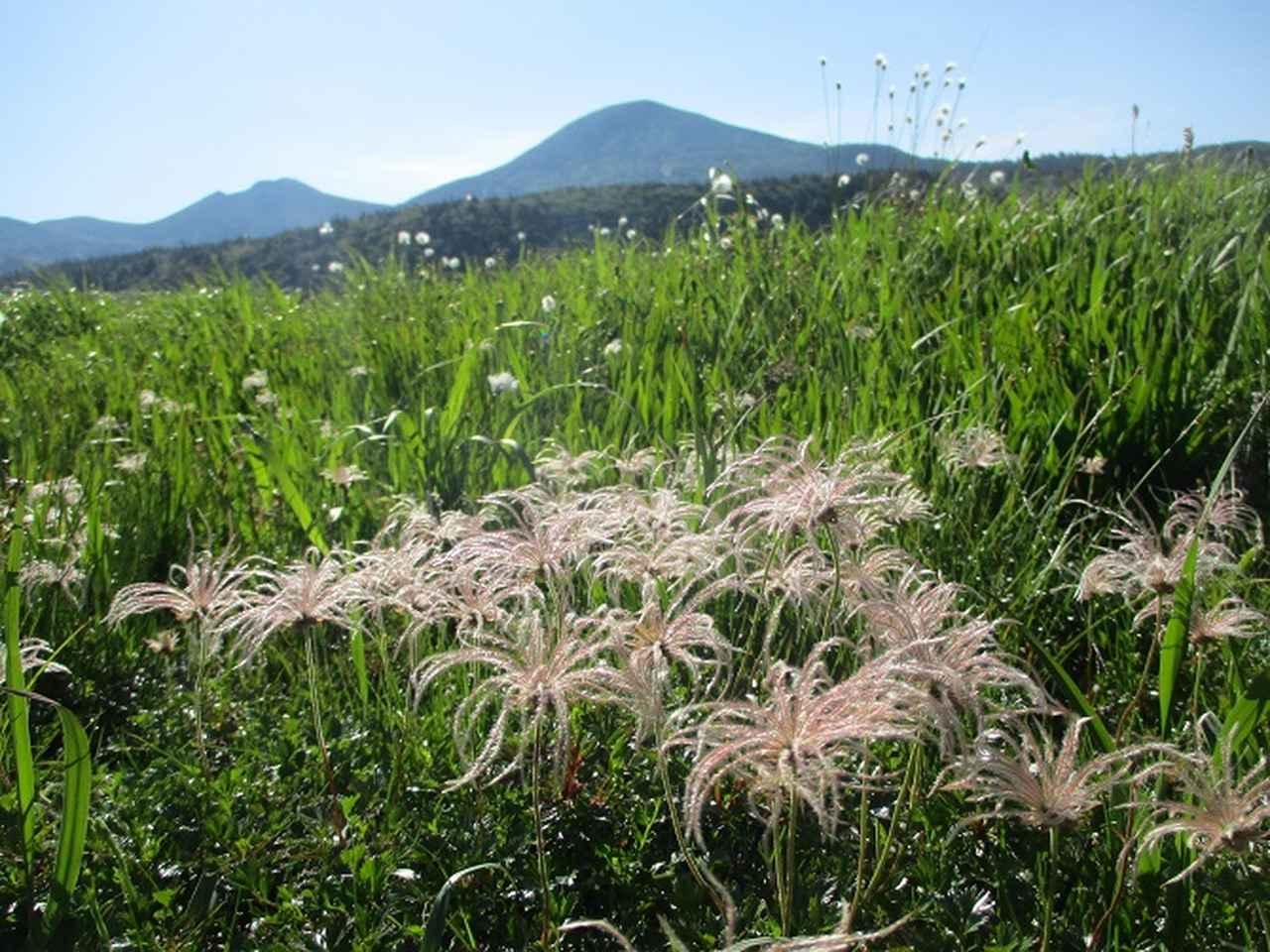 画像11: 7月9日~11日で八幡平・八甲田山・森吉山ツアーにいってきました!