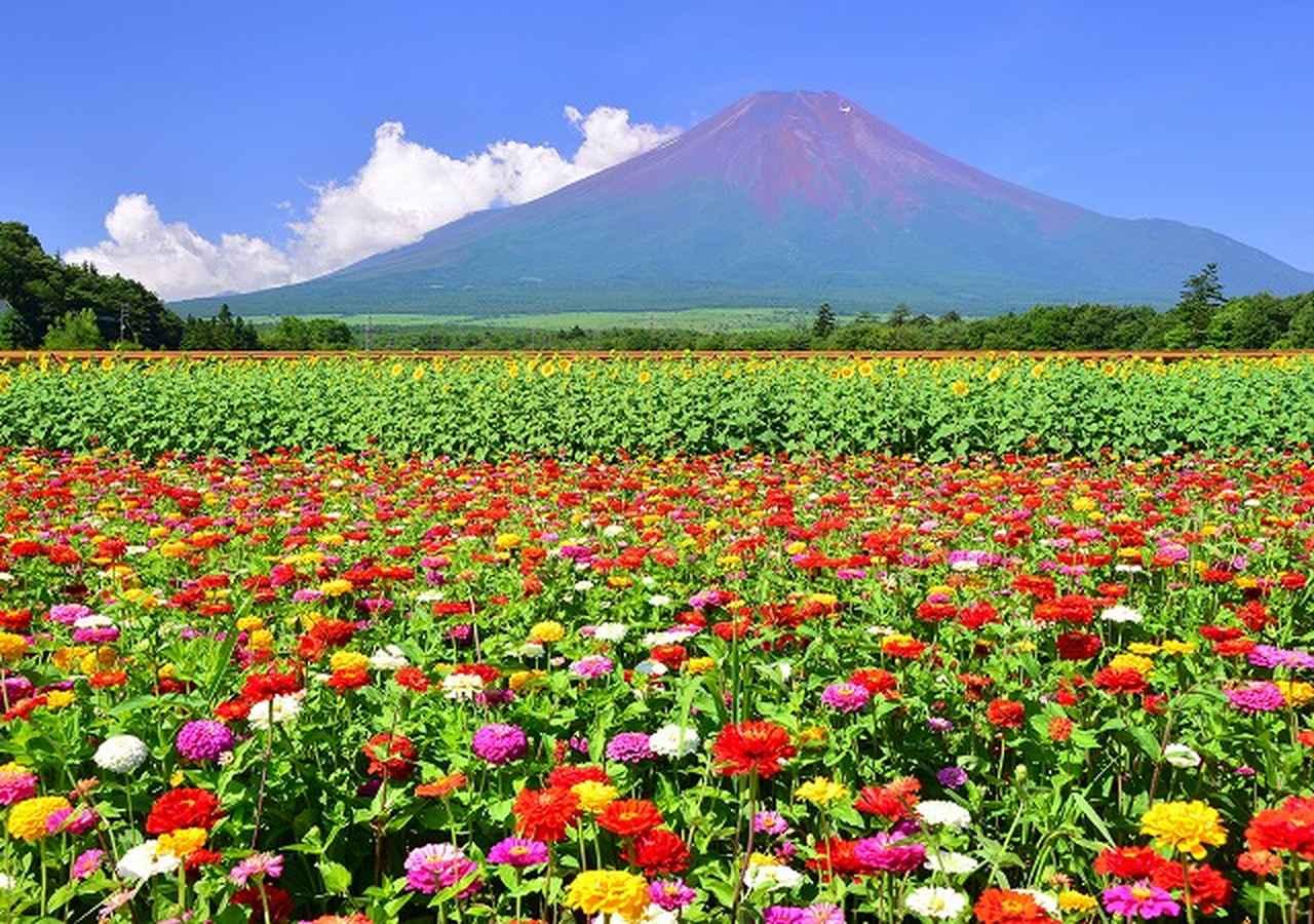 画像: 全12回で回る!2019年9月スタート富士山すそ野ぐるり一周ウォーク 第1回 旅立ち清める富士巡礼の道|クラブツーリズム