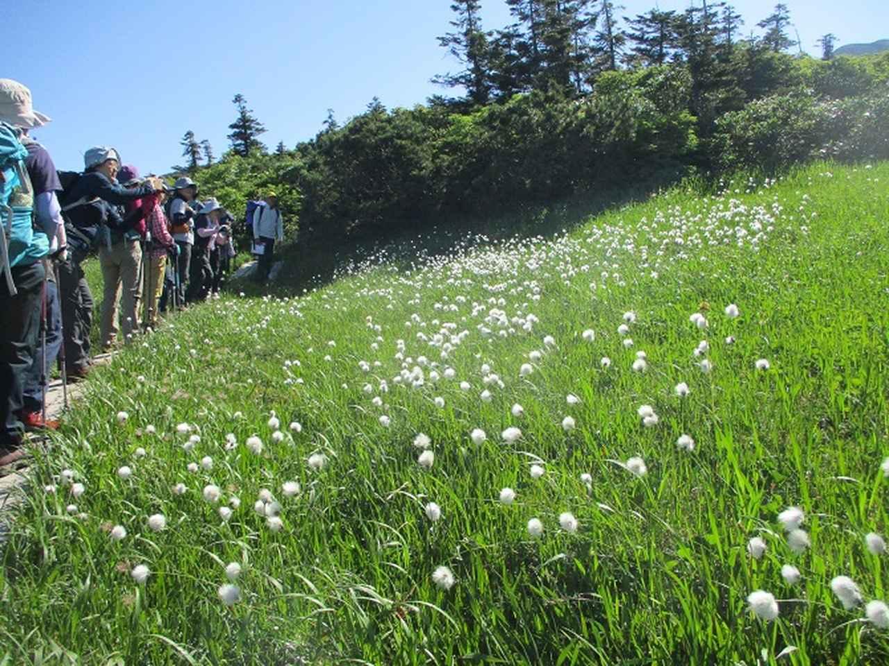 画像13: 7月9日~11日で八幡平・八甲田山・森吉山ツアーにいってきました!