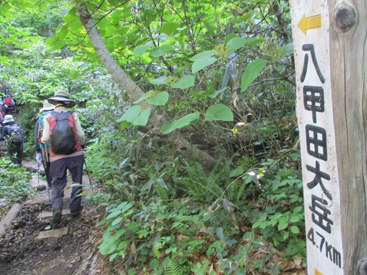 画像9: 7月9日~11日で八幡平・八甲田山・森吉山ツアーにいってきました!