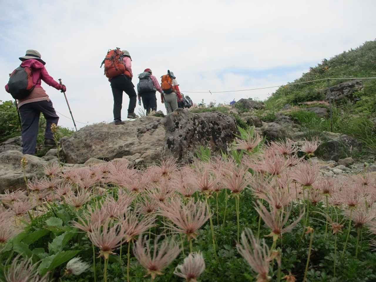 画像11: 7月9日~11日で八幡平・八甲田山・森吉山ツアーに行ってきました!