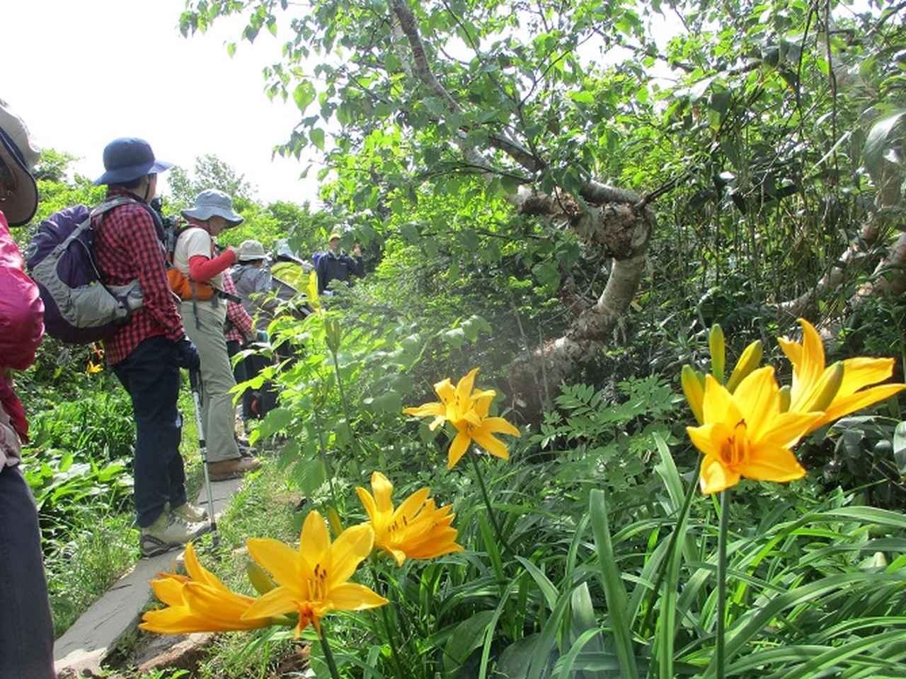 画像9: 7月9日~11日で八幡平・八甲田山・森吉山ツアーに行ってきました!