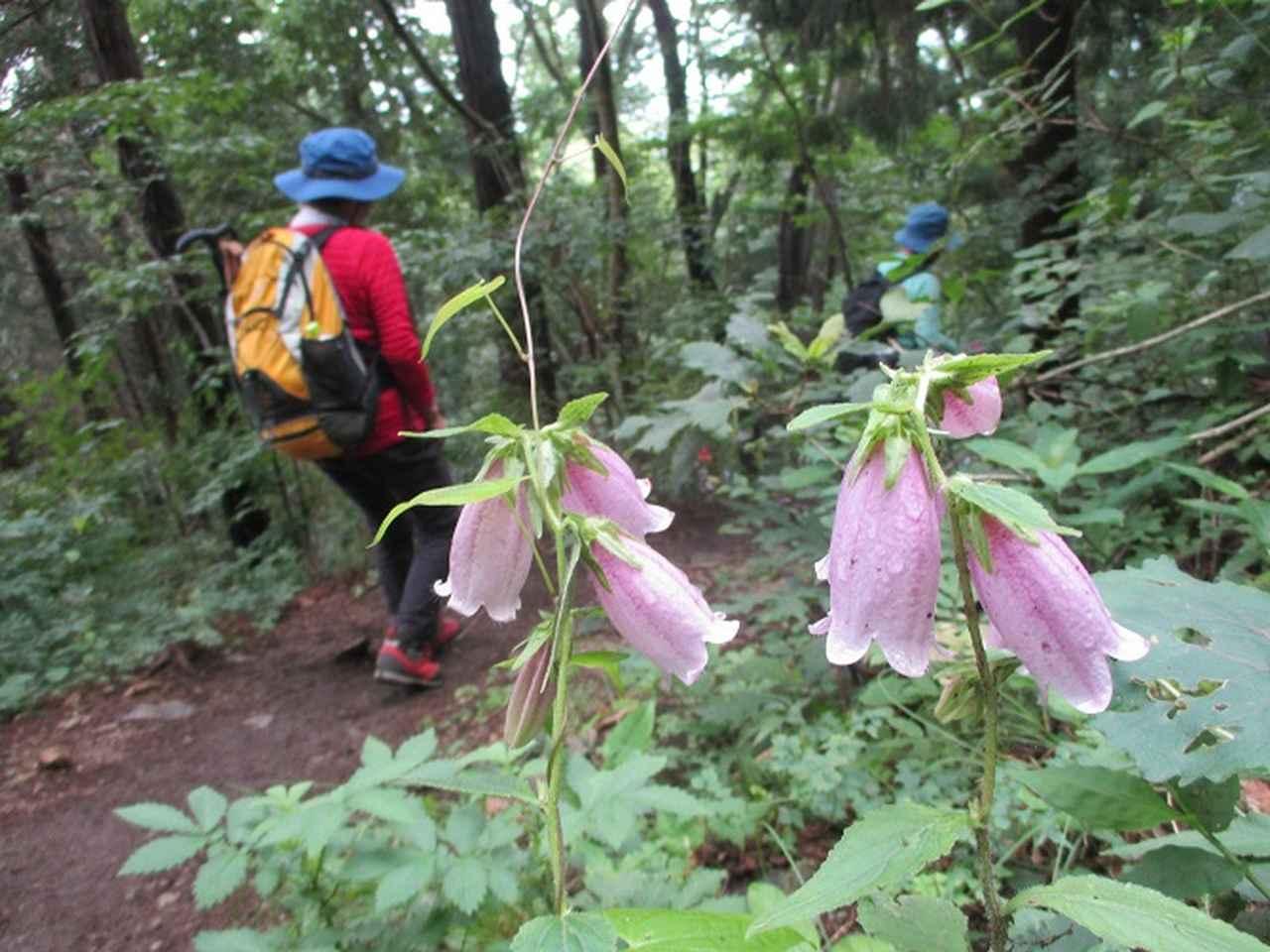 画像13: 7月13日に岡田ガイドの現地集合コースで、 陣馬山 へ行ってきました♪
