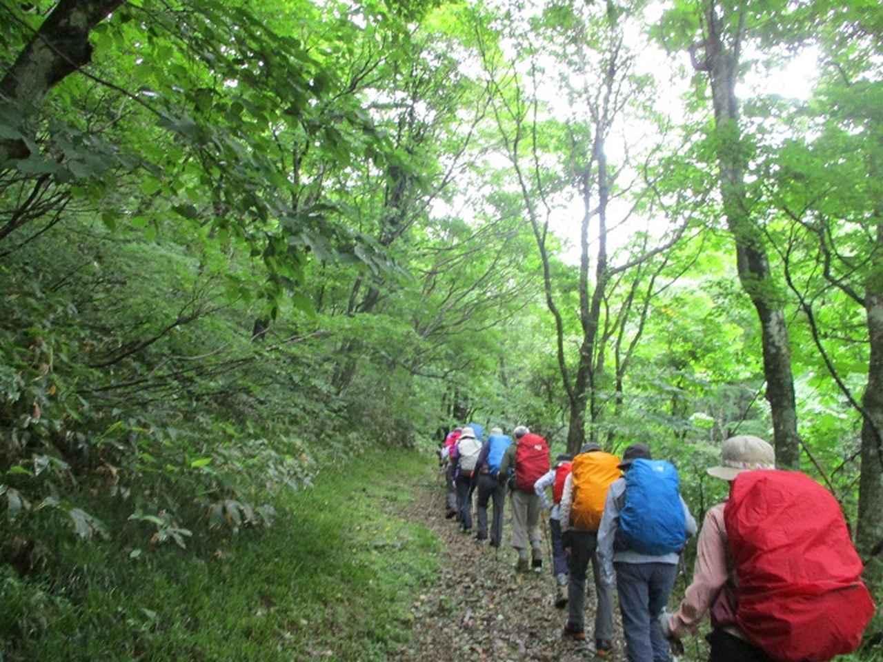 画像1: 7月16日より2泊3日で山旅会 「三国山と苗場山」 ツアーに行ってきました!