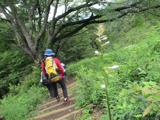 画像12: 7月13日に岡田ガイドの現地集合コースで、 陣馬山 へ行ってきました♪