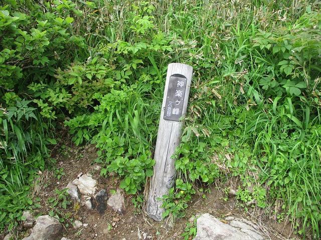 画像5: 7月16日より2泊で山旅会 「三国山と苗場山」 ツアーに行ってきました!