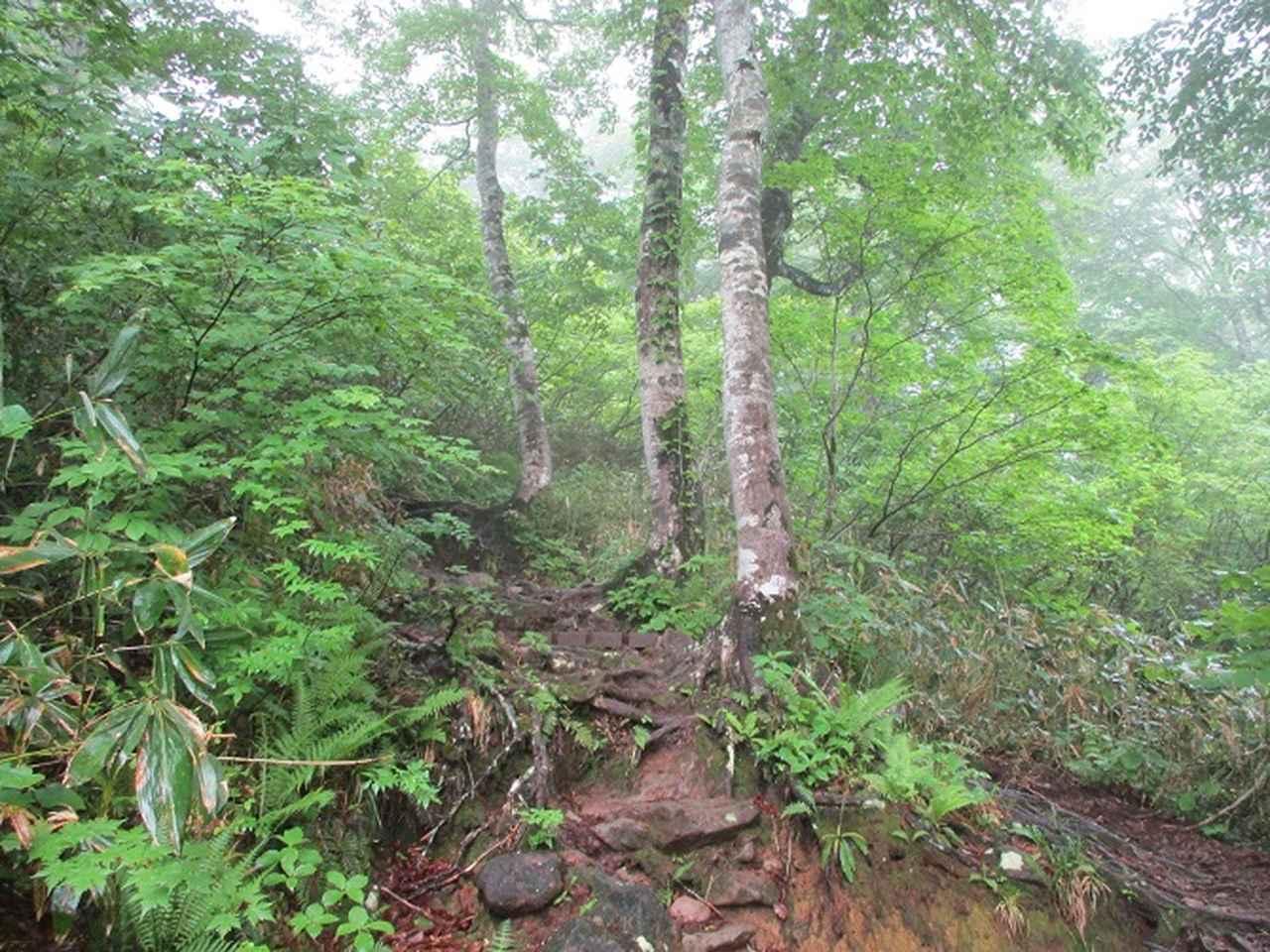 画像1: 7月16日より2泊で山旅会 「三国山と苗場山」 ツアーに行ってきました!