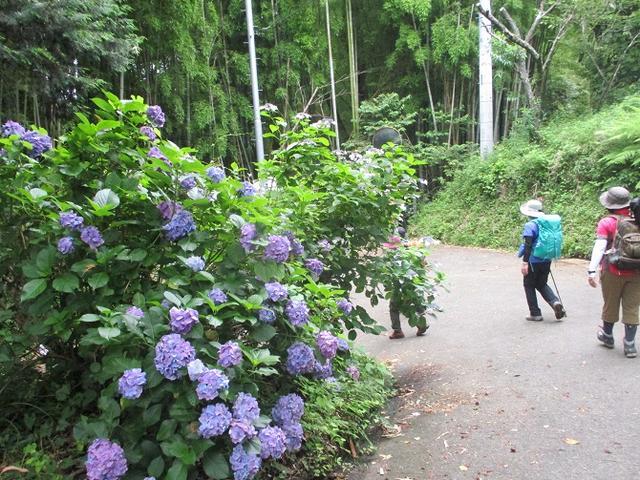 画像15: 7月13日に岡田ガイドの現地集合コースで、 陣馬山 へ行ってきました♪