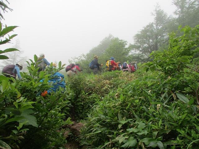 画像6: 7月19日に山旅会 「湯ノ丸山」 ツアーに行ってきました!