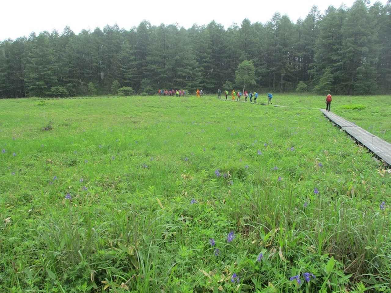 画像16: 7月19日に山旅会 「湯ノ丸山」 ツアーに行ってきました!