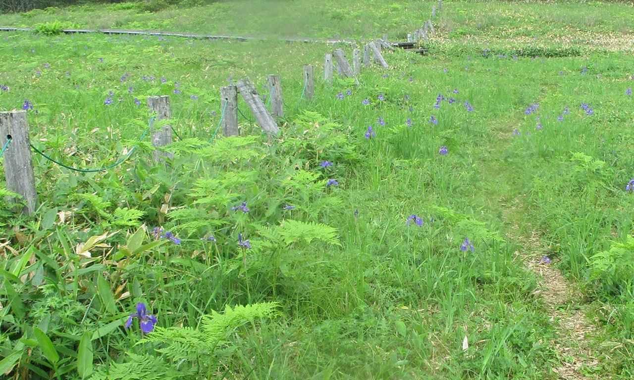 画像17: 7月19日に山旅会 「湯ノ丸山」 ツアーに行ってきました!