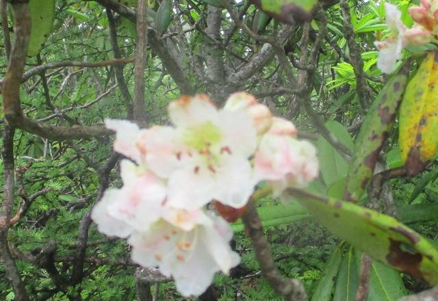 画像7: 7月19日に山旅会 「湯ノ丸山」 ツアーに行ってきました!