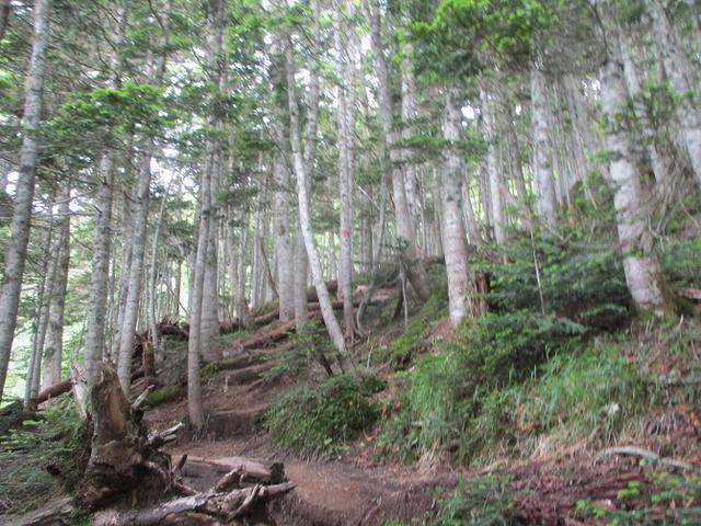 画像2: 来年夏のツアーの素材を探して南アルプスの 鳳凰三山 を歩いてきました♪