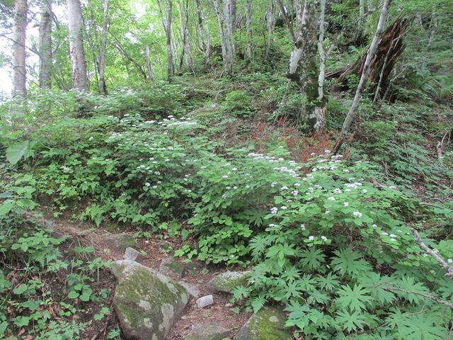画像3: 来年夏のツアーの素材を探して南アルプスの 鳳凰三山 を歩いてきました!