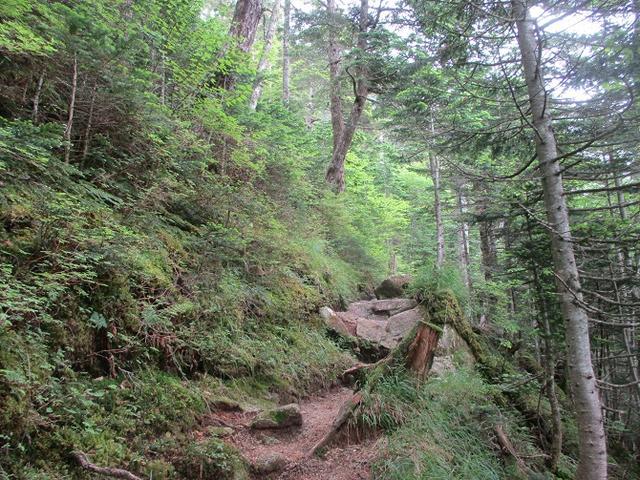 画像6: 来年夏のツアーの素材を探して南アルプスの 鳳凰三山 を歩いてきました!