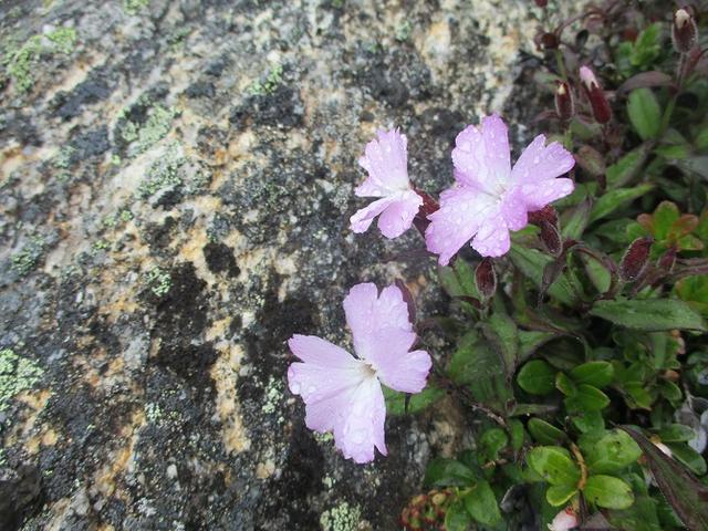 画像7: 来年夏のツアーの素材を探して南アルプスの 鳳凰三山 を歩いてきました♪