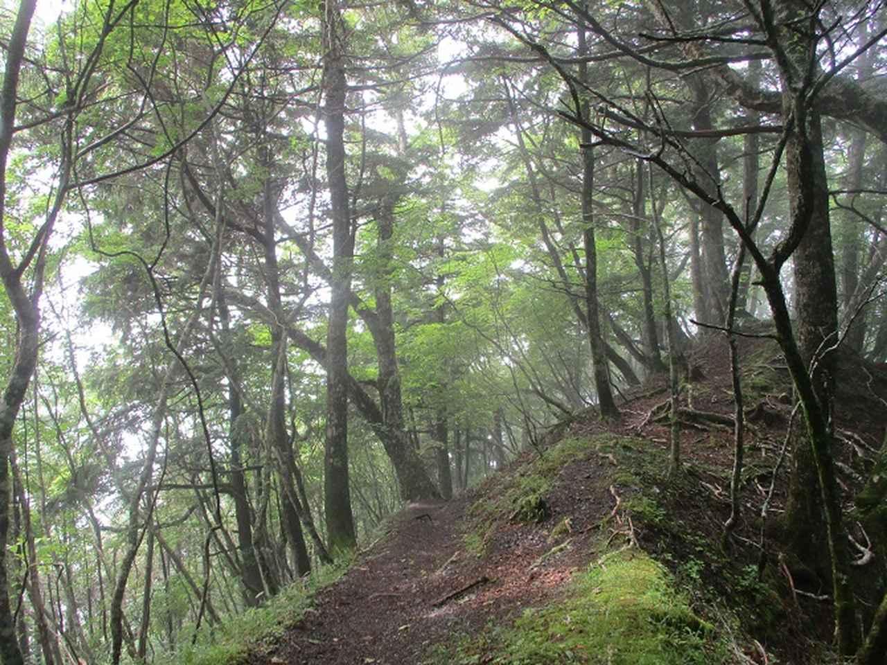 画像13: 来年夏のツアーの素材を探して南アルプスの 鳳凰三山 を歩いてきました♪