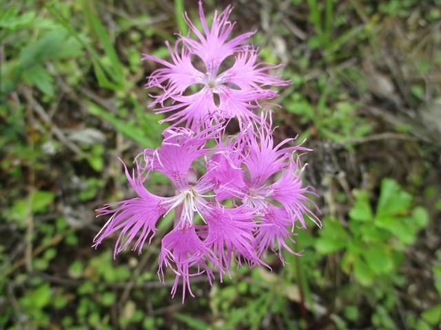 画像13: お花満喫の 飯盛山 にいってきました♪