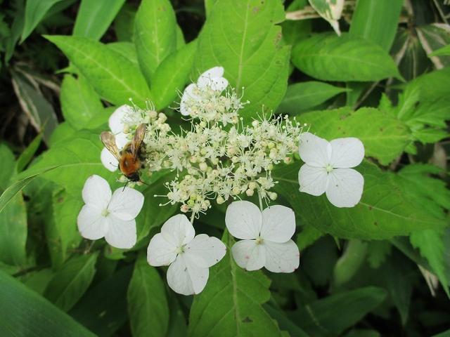 画像2: お花満喫の 飯盛山 にいってきました♪