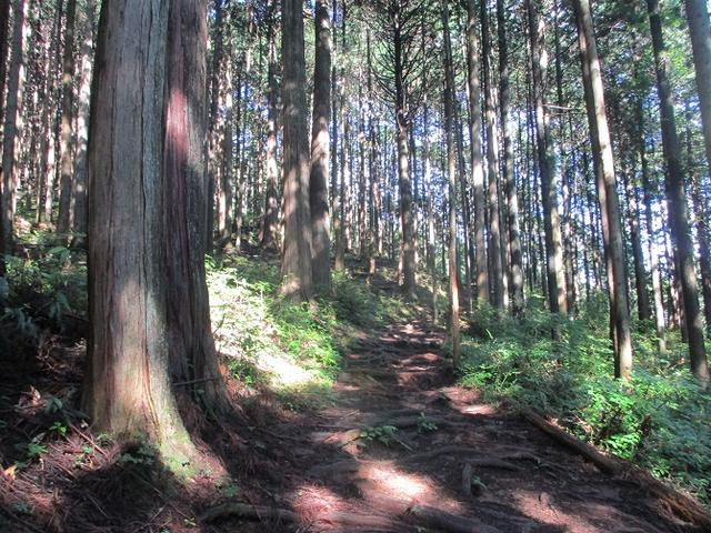 画像2: 8月の山旅会 「大塚山」 ツアーの下見に行ってきました!