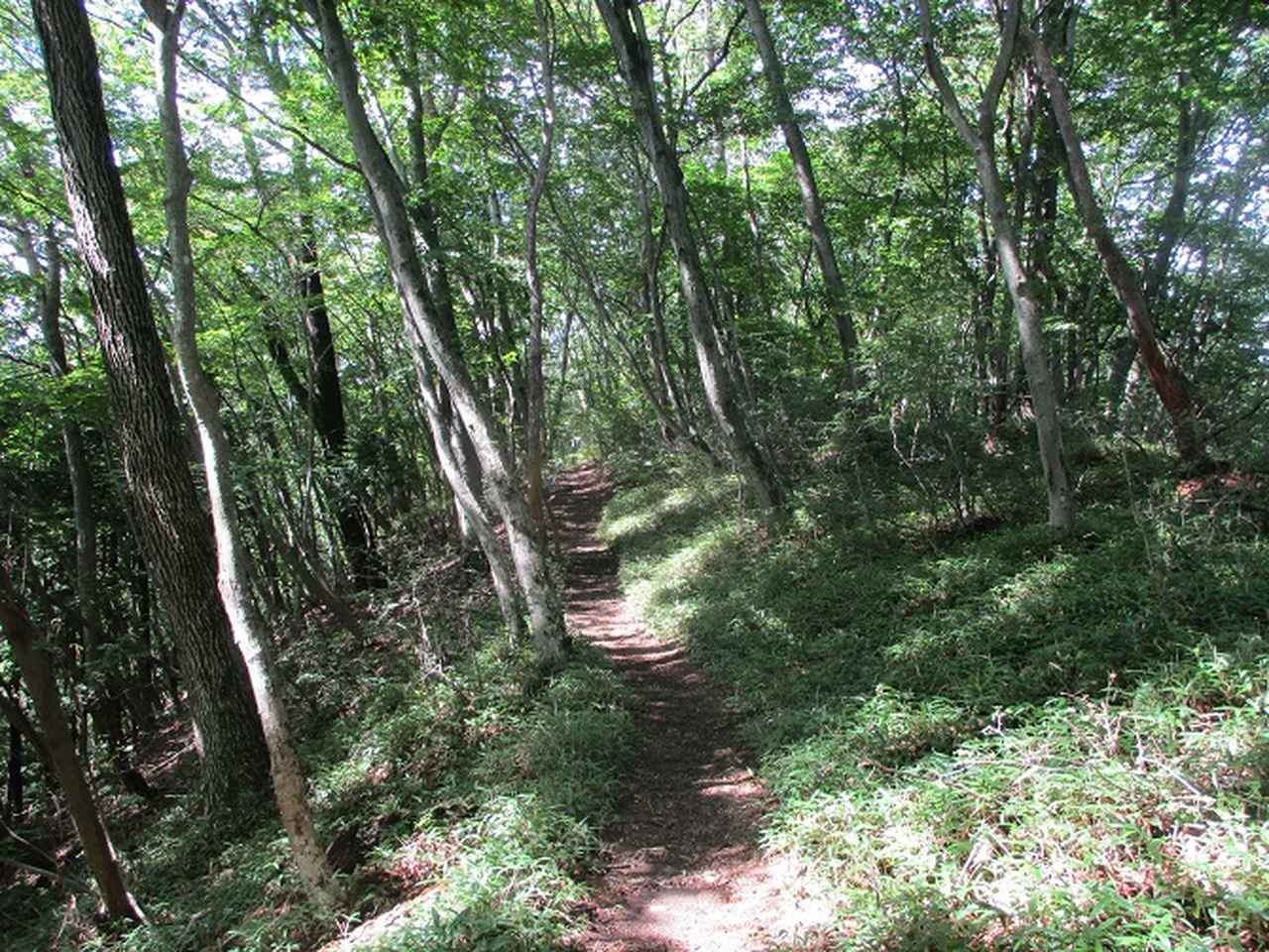 画像4: 8月の山旅会 「大塚山」 ツアーの下見に行ってきました!