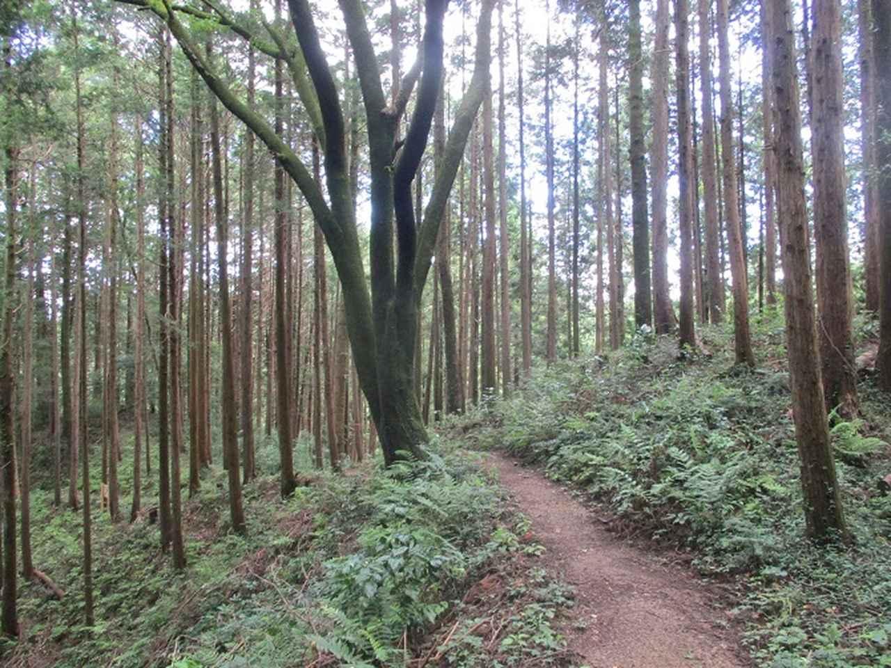 画像11: 8月の山旅会 「日の出山」 ツアーの下見に行ってきました!