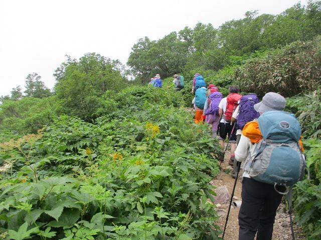 画像8: 7月29日から3日間山旅会 「白山」 ツアーに行ってきました!