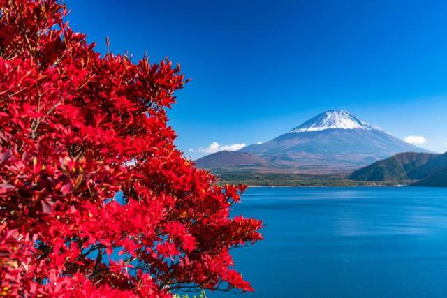 画像: <ウォーキング>『ビュースポットから望む富士山 紅葉の精進湖から本栖湖へ』