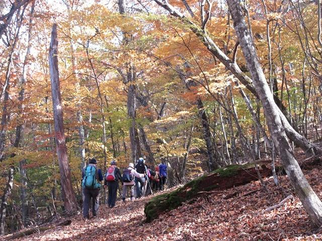 画像10: 少し早いですが10月の 「大菩薩嶺から牛ノ寝通り」 ツアーのご案内です!